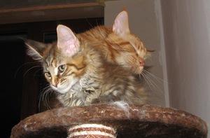 Zafira und Wessley